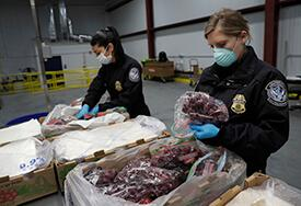 CBP Agriculture Specialists, wearing personal protective equipment, inspect fruit shipments arriving at the port of Philadelphia during the coronavirus pandemic.