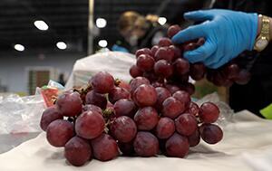 CBP agriculture specialists, wearing personal protective equipment, inspect a shipment of grapes arriving at the port of Philadelphia during the coronavirus pandemic.  Photo by Glenn Fawcett