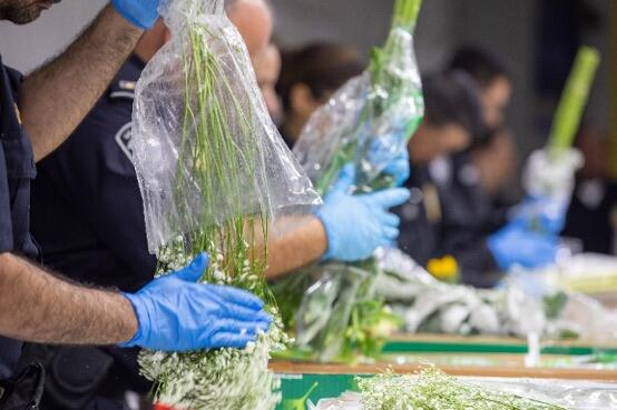 CBP agriculture specialists examine imported flowers at the Port of Miami, Florida.