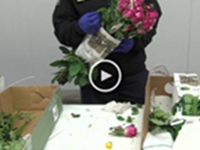 Video: CBP Flower Inspection B-roll