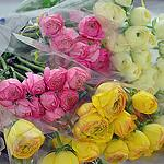 Photo of pink, white and yellow roses
