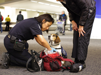 U.S. Customs and Border Protection Detector Dog