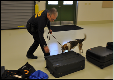 Drug Dog sniffing suitcases