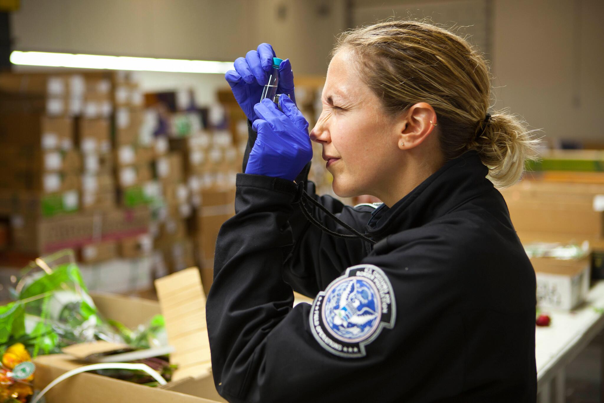 An agriculture specialists looks for results of a test given to imported flowers.
