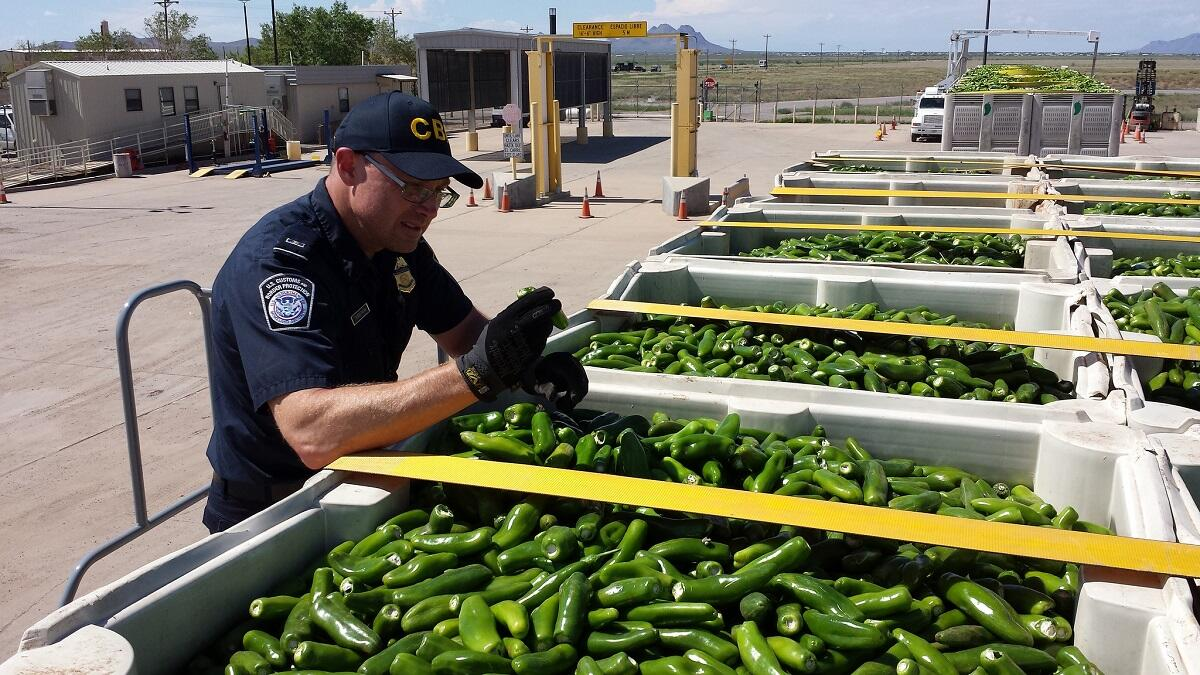 A CBP officer inspects a huge shipment of peppers arriving from Mexico through El Paso, Texas.