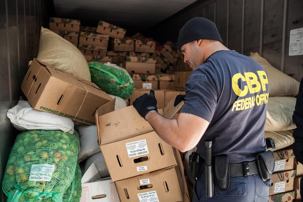 A CBP officer inspects food cargo within a truck at Red Hook in Brooklyn, N.Y. <em>(photo by Josh Denmark)</em>