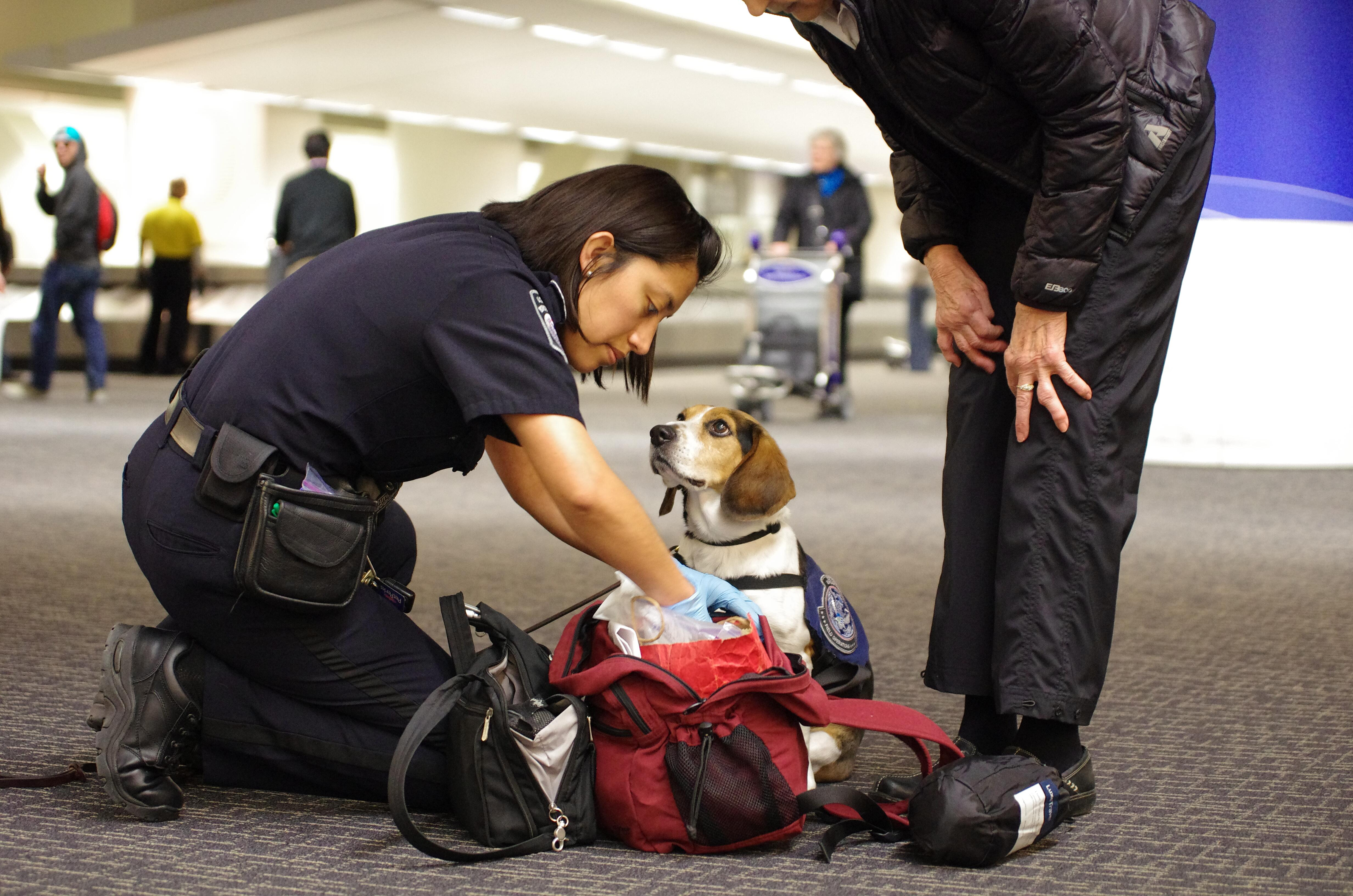 A CBP Agriculture Specialist checks to see what her partner, Tyco, has detected in a traveler's carry-on bag at the San Francisco International Airport.