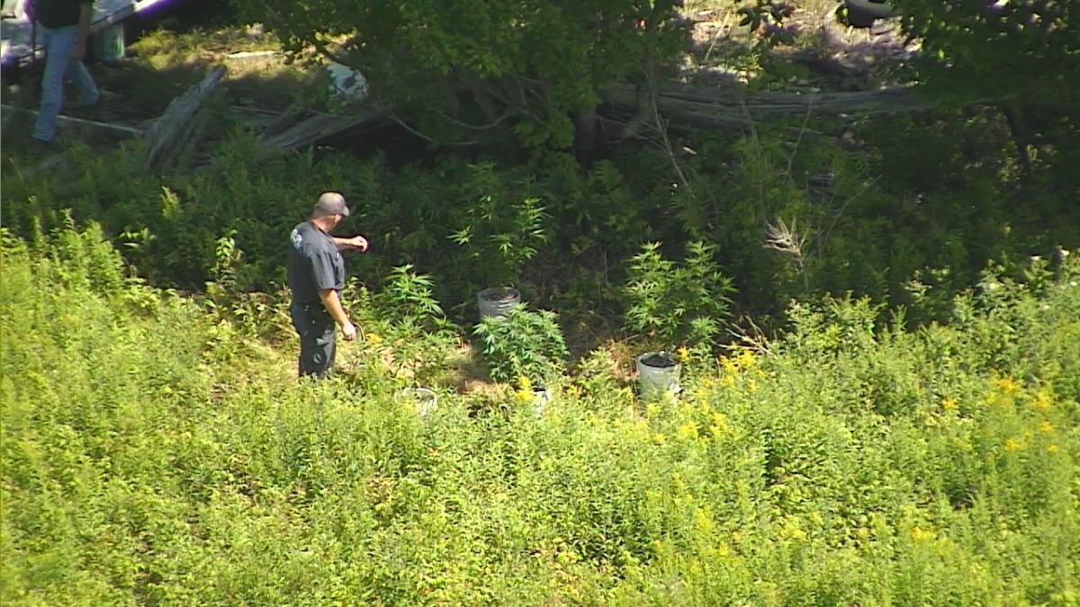Border Patrol agent approaches marijuana growing area