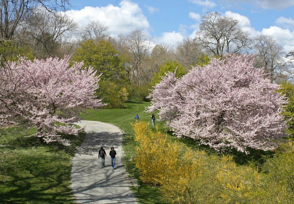 Photo of the Arnold Arboretum
