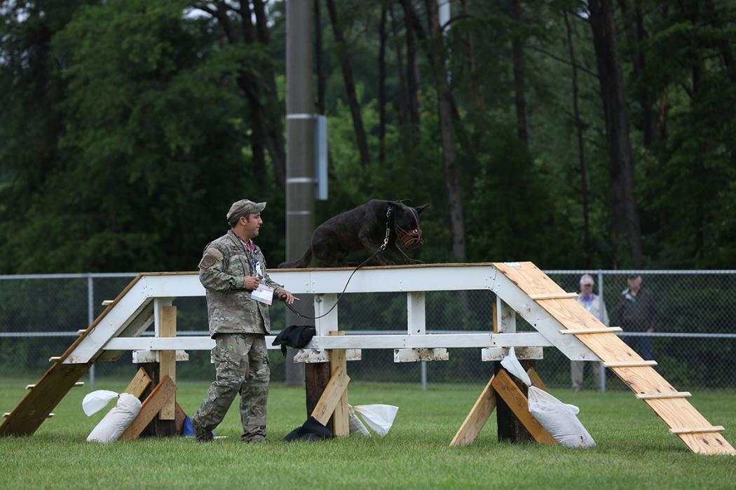 Photo of CBP canine team in competition
