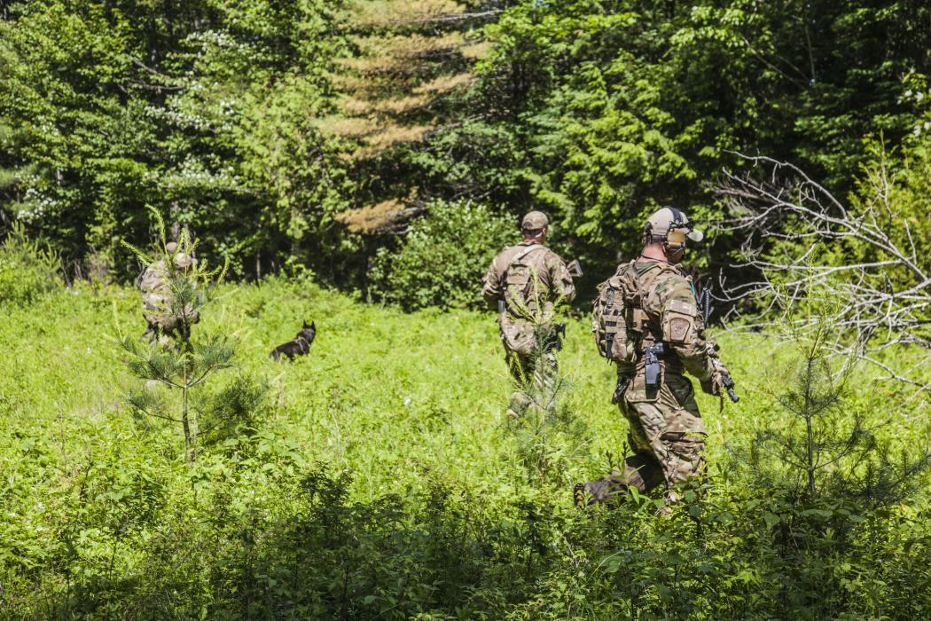Photo of law enforcement teams searching the woods