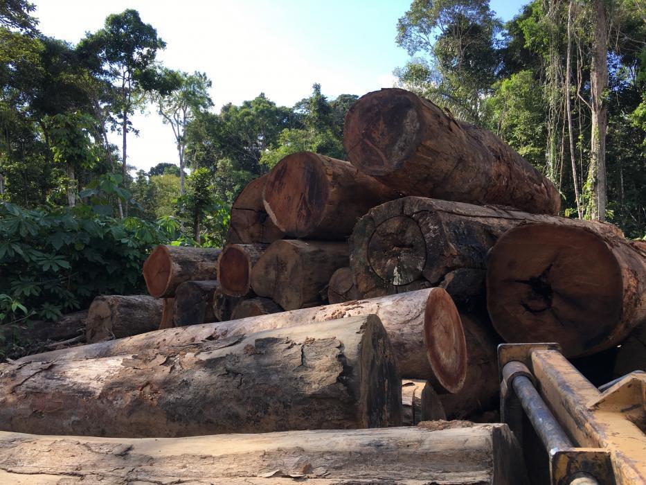 logs in Amazon rain forest
