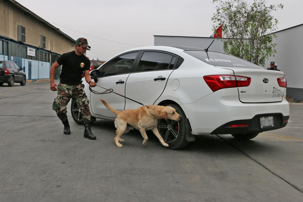 Photo of Peruvian K-9 handler following his dog while searching for illegal drugs in a vehicle