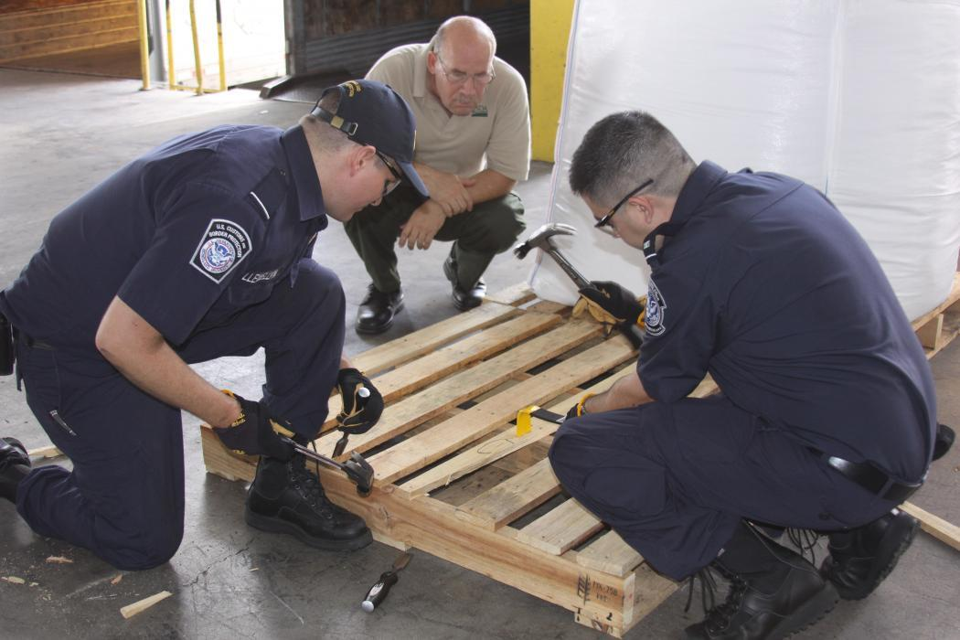 Photo of CBP agriculture specialists in Laredo, Texas, examining a wooden pallet for signs of insect infestation