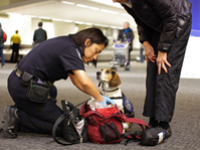 CBP agriculture canine sniffs luggage for prohibited food products