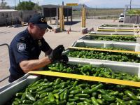 A CBP officer inspects a huge shipment of peppers arriving through El Paso, Texas.