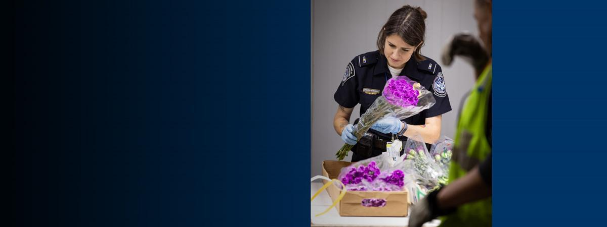 CBP Agriculture Specialists inspects flowers