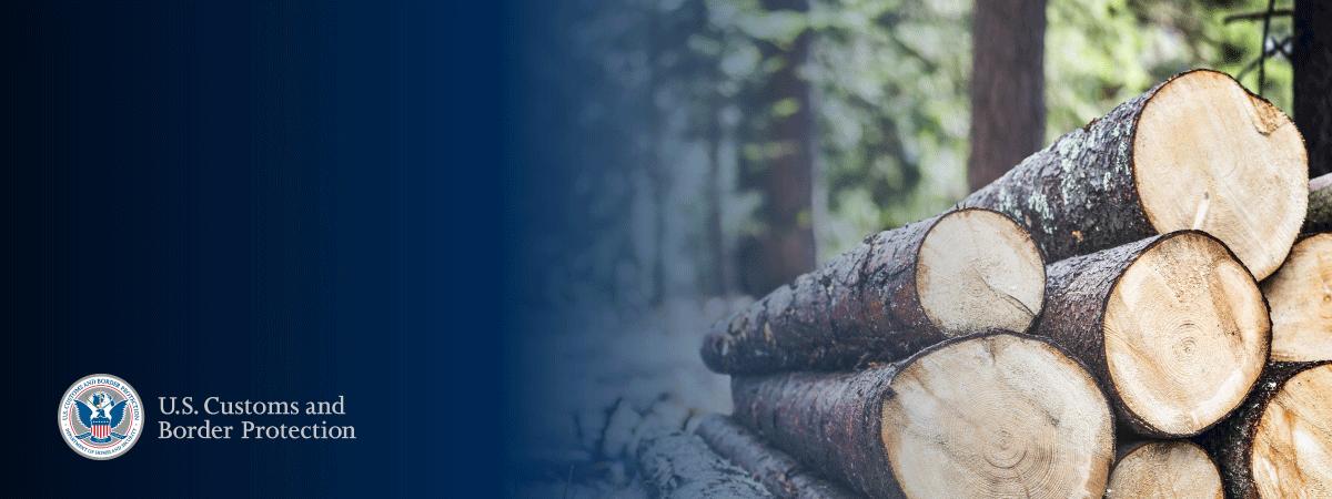 CBP Stops Illegal Logging