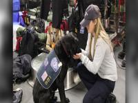 CBP canine working with support staff