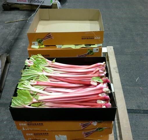 rhubarb stems from Netherlands that contained a first-in-nation pest discovery
