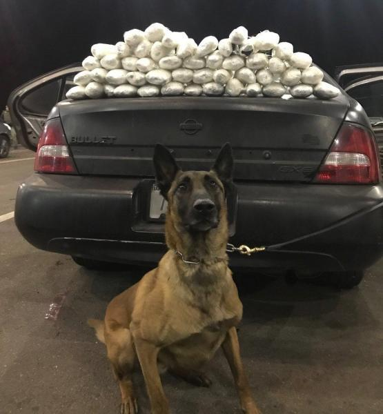 Border Patrol canine sitting in front of the Nissan Altima with the 50 packages of meth on the trunk