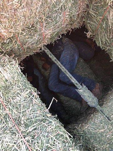 El Centro Sector Border Patrol agents arrested a man suspected of smuggling thirteen illegal aliens concealed under hay bales on the back of a tractor trailer Monday evening.