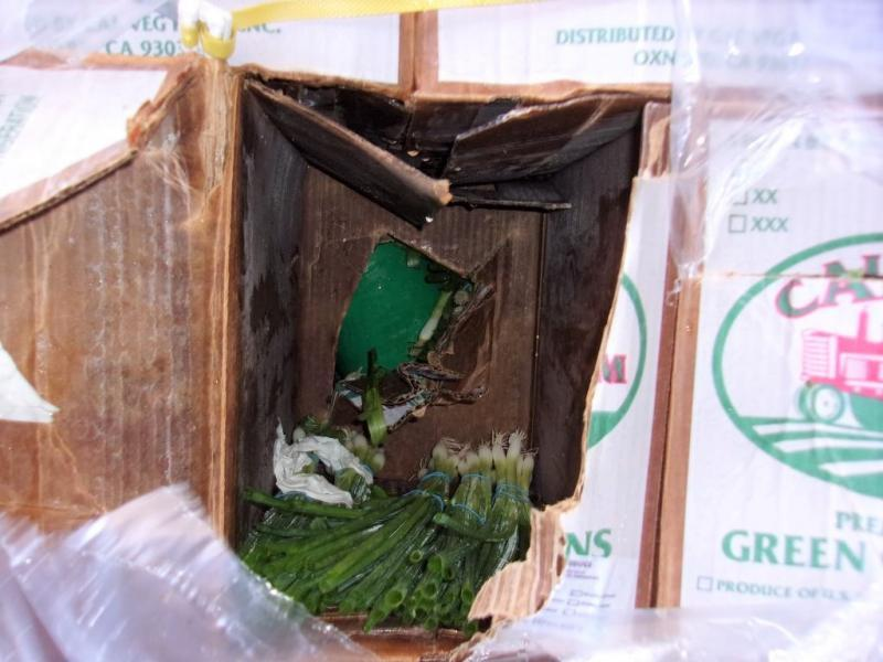 CBP officers extracted 40 wrapped packages of methamphetamine co-mingled with the green onions.