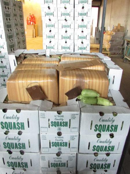 Officers removed 240 bundles of marijuana from within a shipment of Italian squash that was referred for further agricultural inspection on March 1.