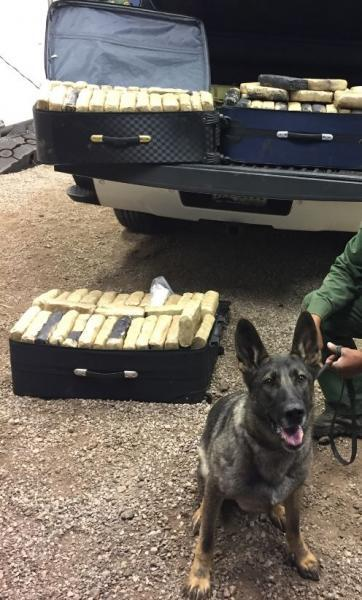 Agents stopped a truck at the SR191  checkpont and a canine alerted to suitcases, which contained more than  200 pounds of marijuana