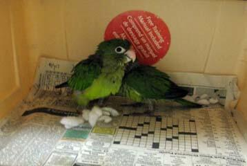 Agriculture specialists assigned to the Port of San Luis seized two live parrots that had been concealed within a stuffed animal