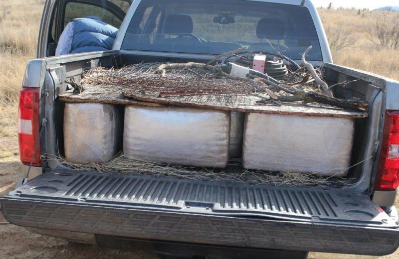 over 700 pounds of marijuana in back of pickup truck