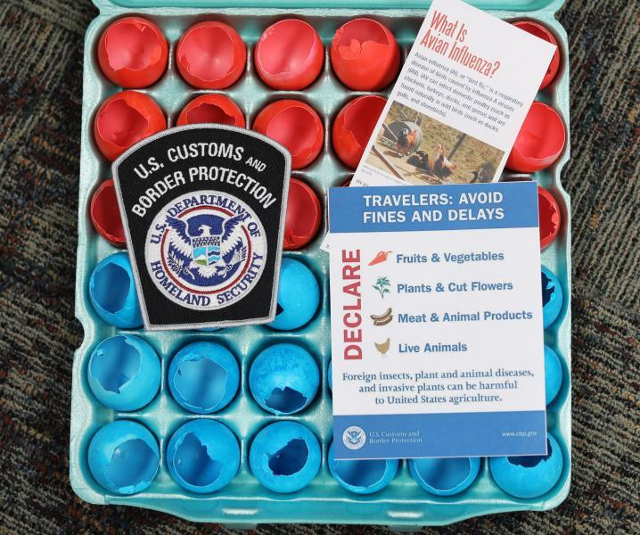CBP reminds the public they are limited to 12 cascarones per passenger and they must be clean, dry and free of egg residue