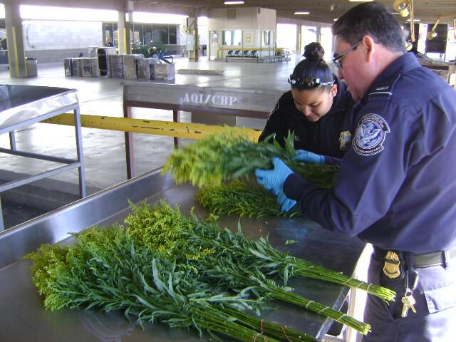 Floral inspection at El Paso port of entry.
