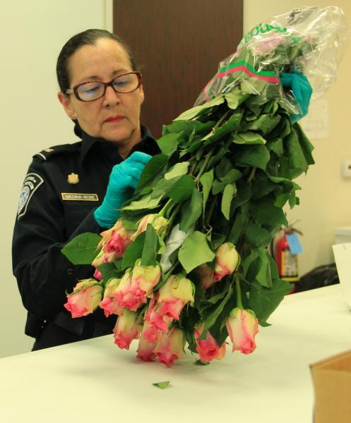 CBP Agriculture Specialists examines flowers