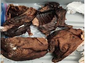 NLIA CBP seize Bush Meat