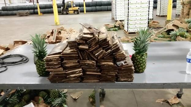 Wilmington Seizes Cocaine with Pineapples