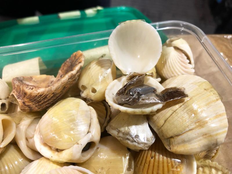 Baltimore CBP discoverd hashish concelaed inside seashells September 30, 2020.