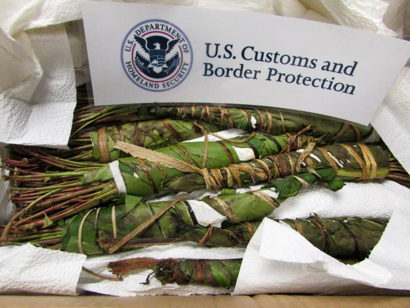Philadelphia CBP officers seized 69 pounds of Khat October 25, 2017 bound for Minnesota.