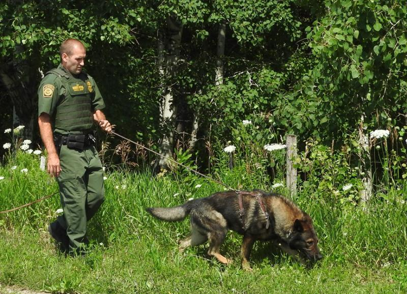 U.S. Border Patrol agent and canine conduct a scent tracking exercise in this file photo..