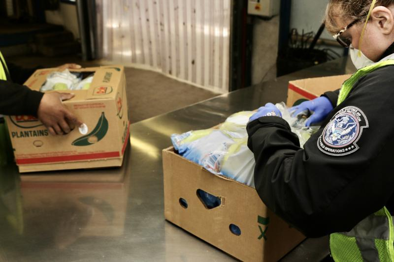 CBP agriculture specialists examine a shipment of imported plantains in Wilmington, Del., during April 2020.