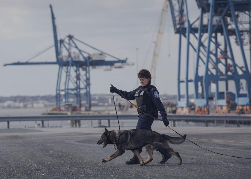 CBP Officer training a canine.