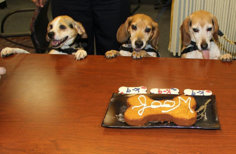 Dino, Chex, and Frodo (L-R) wait to  enjoy some cake during their retirement  ceremony.