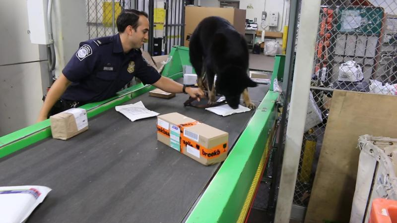 Drug Detection canine, Perro, alerts to a package containing narcotics at O'Hare's International Mail Branch