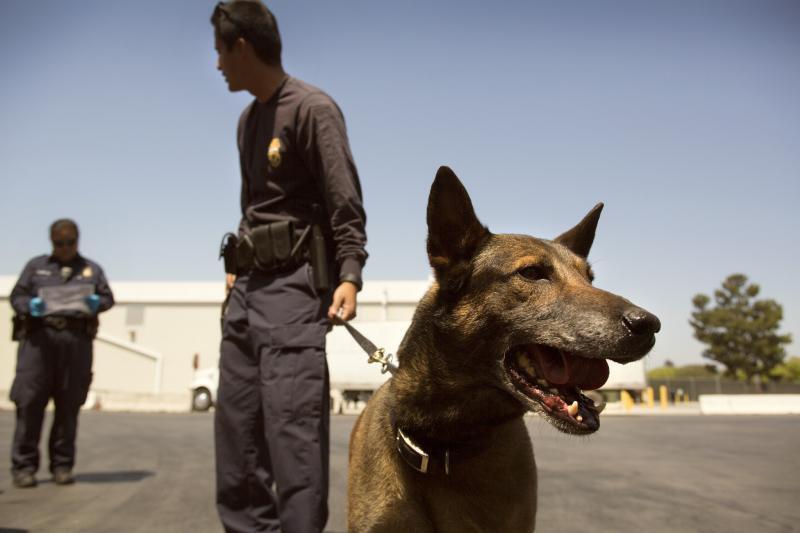 CBP Canine