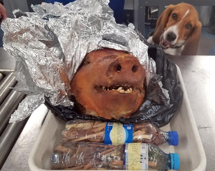 ATL K9 with Roasted Pig