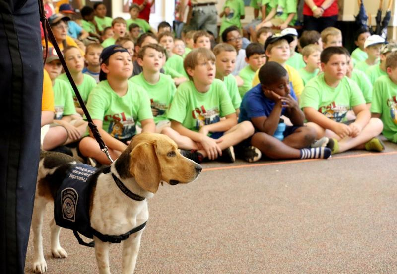 """WADE"" CBP K9 Beagle is next up at  Boy Scouts Summer Camp"