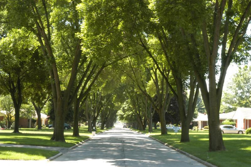 Photo of a tree-lined street in Toledo, Ohio in 2006