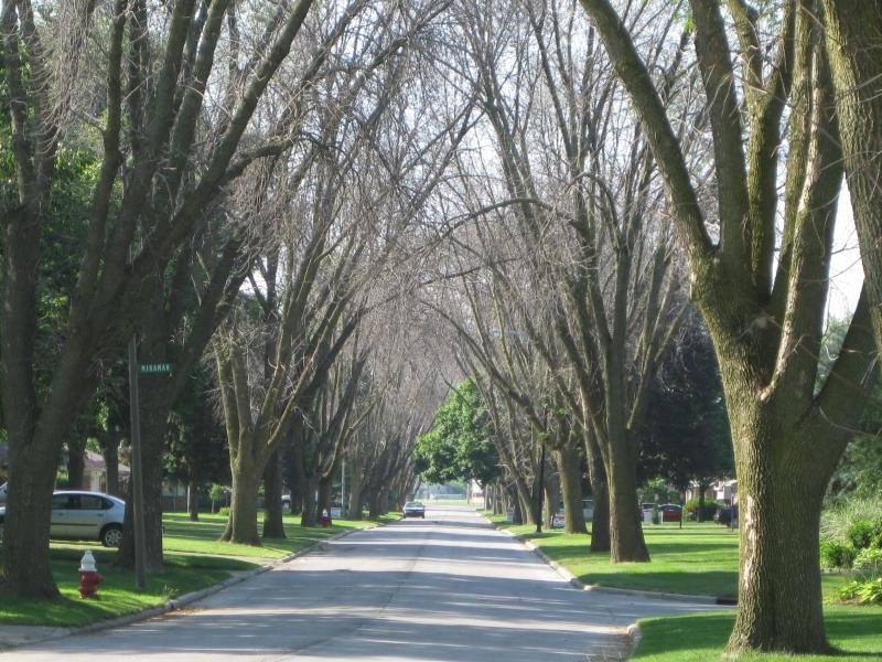Photo of the same street three years later, showing the destructive effects of the Emerald Ash Borer.