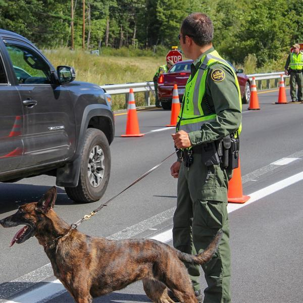 Border Patrol K9 unit working a checkpoint in Swanton Sector. Date unknown.
