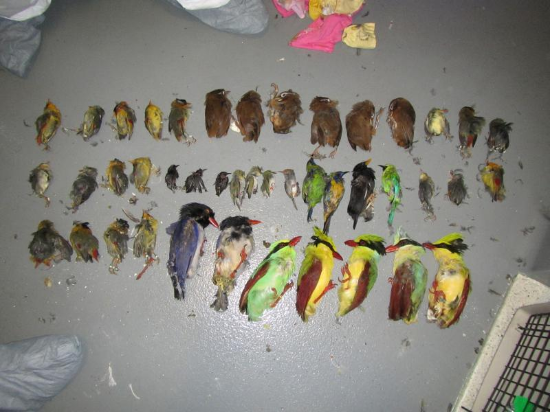 CBP officers seized smuggled birds at LAX